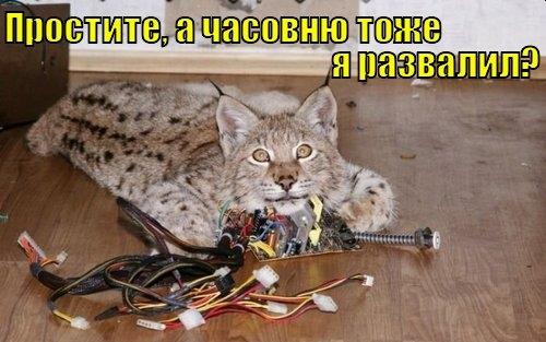 Кот Скрипалей