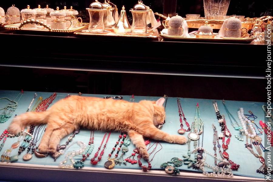 Стамбульские коты котов, кошек, Стамбула, просто, когда, Жители, города, httpsbepowerbacklivejournalcom86986html, другом, животных, расскажу, несколько, Источник, чтобы, Стамбуле, количества, которые, своей, ведут, одной