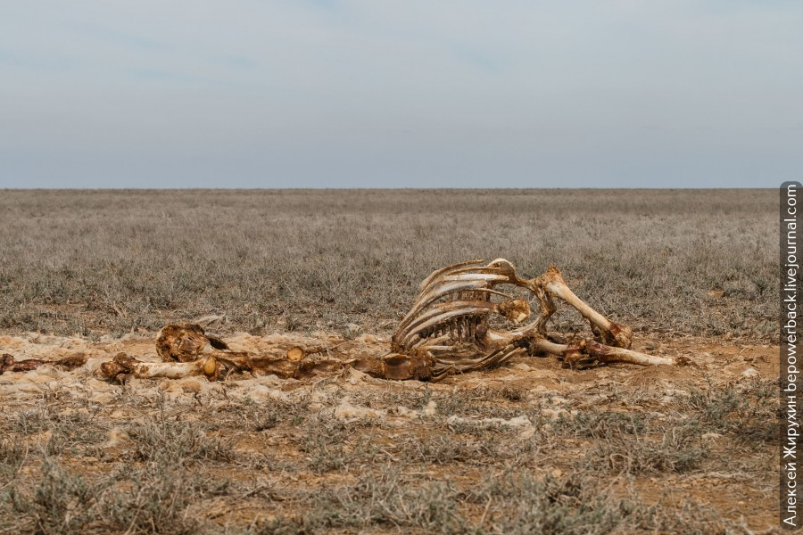 Плато Устюрт - пустыня меж двух морей можно, БекетАта, дорога, несколько, Бейнеу, плато, такой, верблюдов, всего, местности, сторону, случае, будет, через, более, ждать, httpszenyandexrumediabepowerbackplatoustiurtpustyniamejdvuhmorei5cd01536a8ac8300b349859e, дороге, Источник, ехать