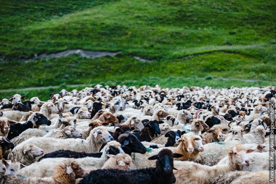 Как выглядят полузаброшенные села древней Дигории в горах Северной Осетии