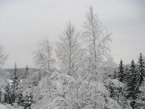 Finnskog (198)