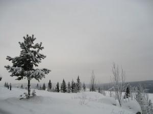 Finnskog (200)