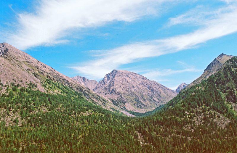 Горы в лесах