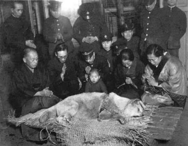 Хатико-перед-его-похоронами-в-1935-году