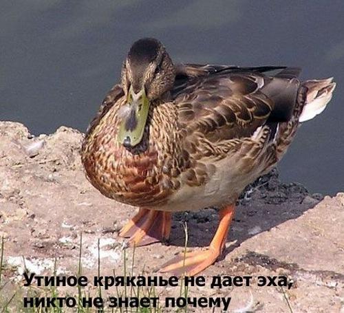 0_7f7ba_e502921d_L