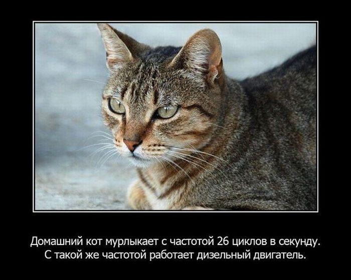 1328237630_rkukzegaytvmijy