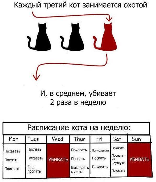 1351446120_veselye-fakty-o-kotah