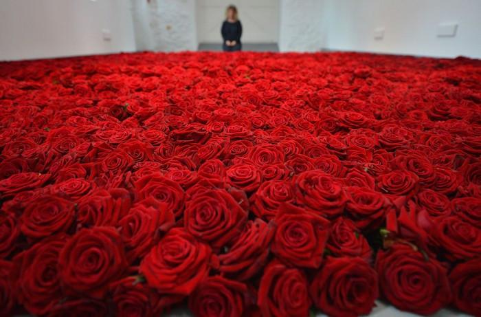 gallaccio-roses-1