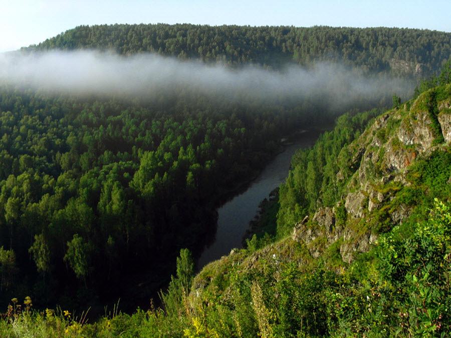 novosibirsk-region-woods