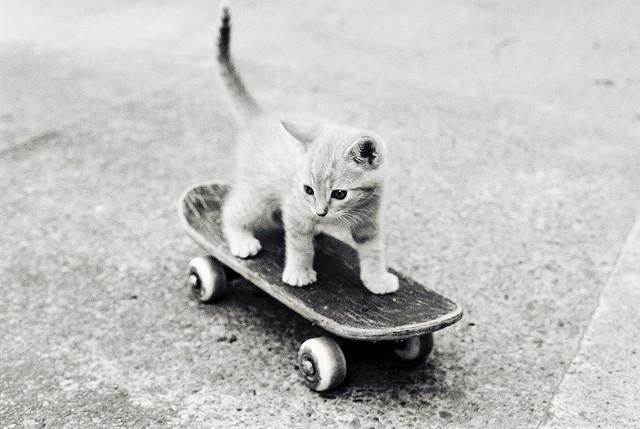 catskateboardkittenjpg