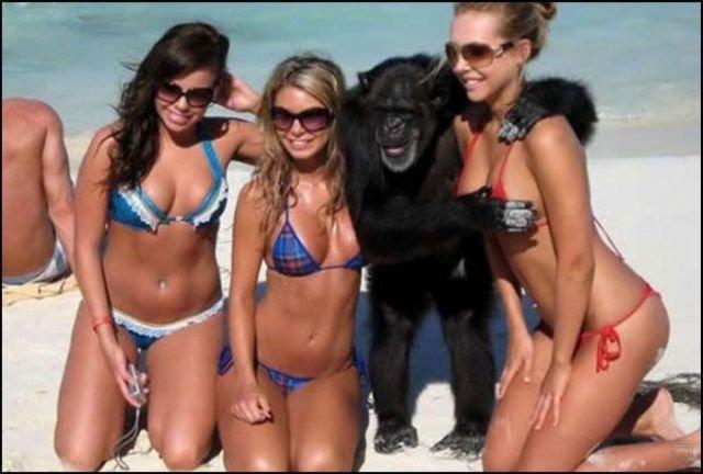1266214240_funny_beach_04