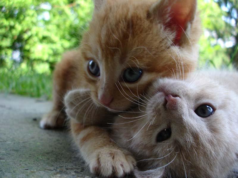 Kitten-Hugging-Techniques-17