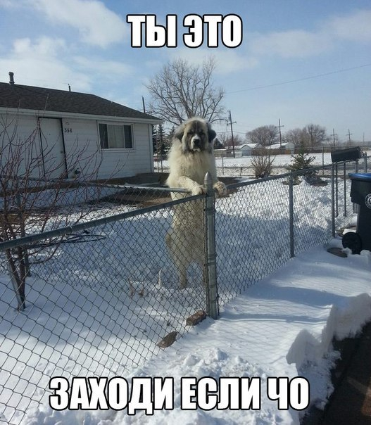1_1moba-czm4o
