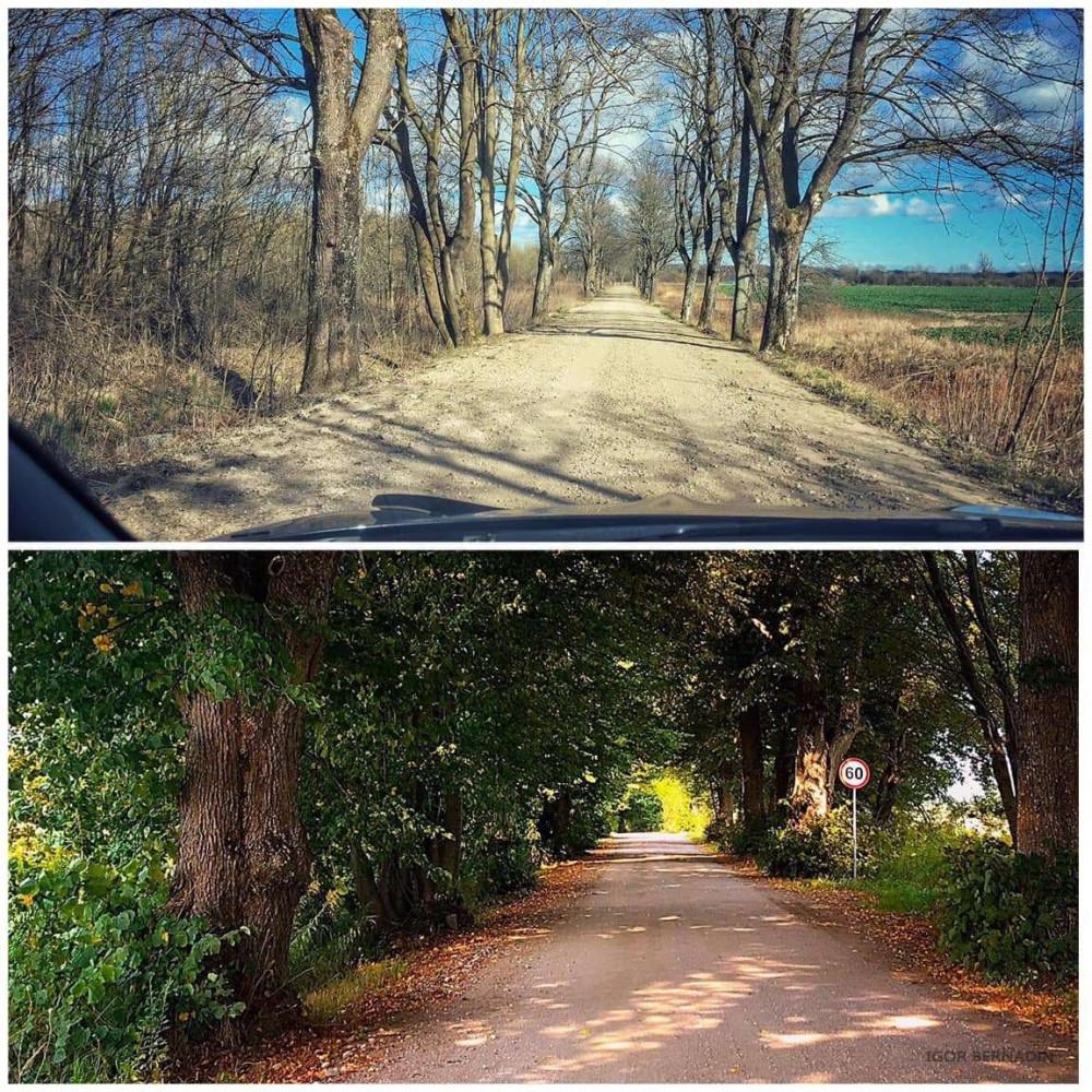 По дороге к священной роще Ромува. Вверху - март, внизу - сентябрь.