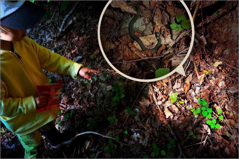 Вишенкой на наш лесной тортик стала встреча с крохотным, но настоящим ужиком, что спровоцировало у нас мурашки по телу от неожиданности, а у внука - желание взять его в руки и обогреть, бедняжку.