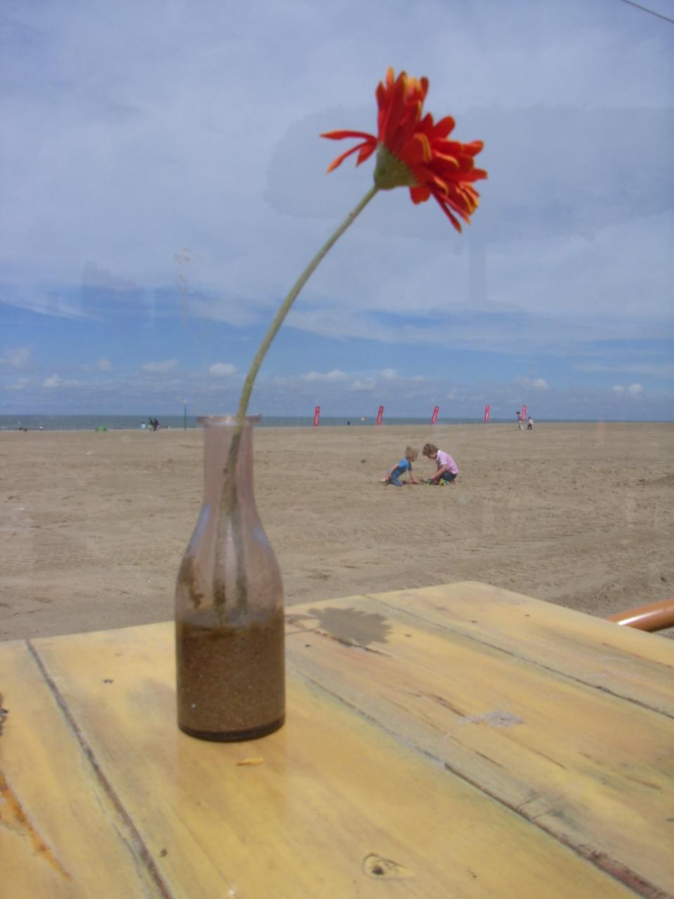 Foto's voorjaar 2011 036