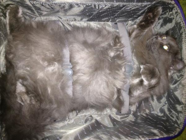 упаковка кота