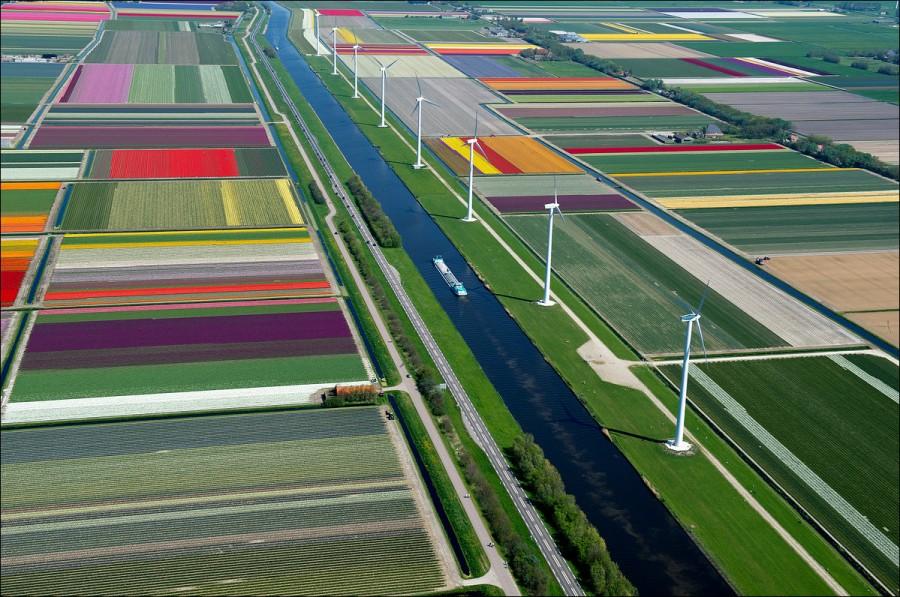 tulip-fields-002