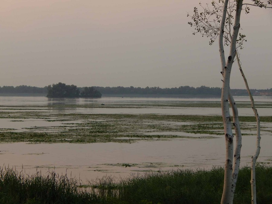 Остров дымка и береза