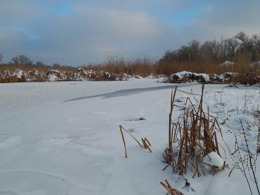 Лёд и камыши2