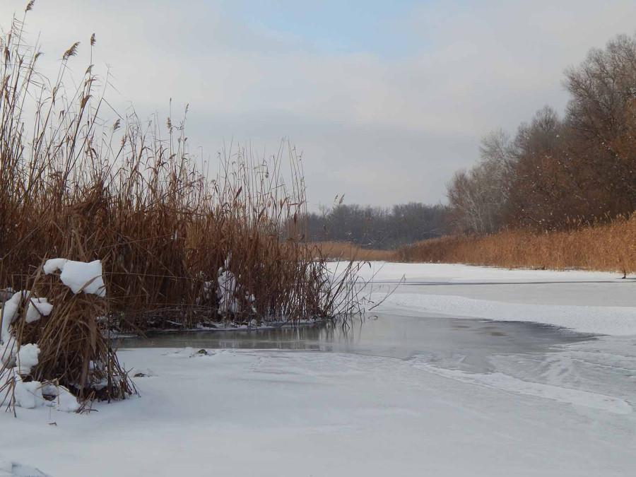 Лёд и камыши3