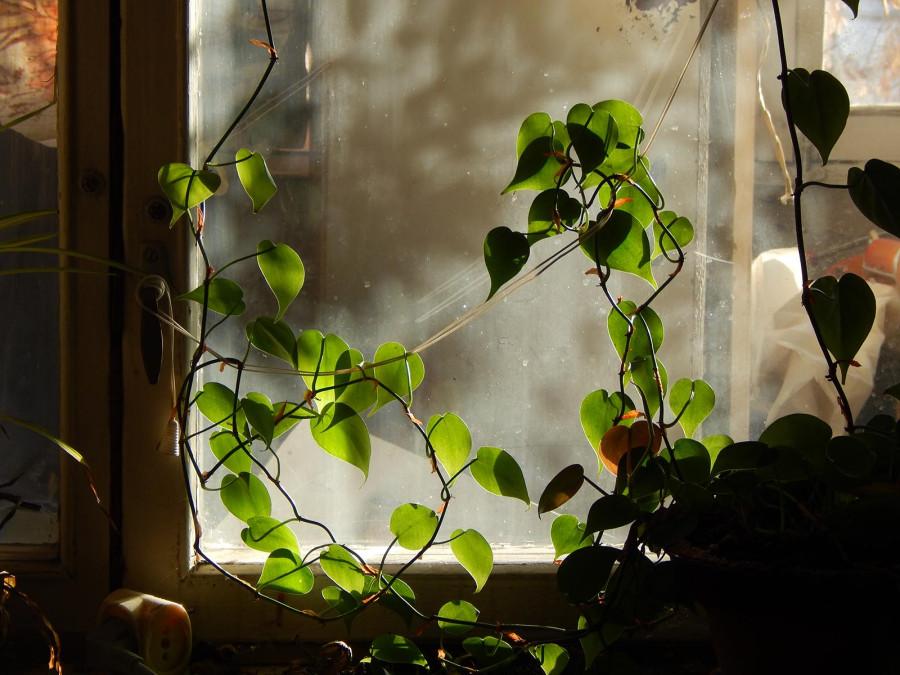Листья, пыль и стекло
