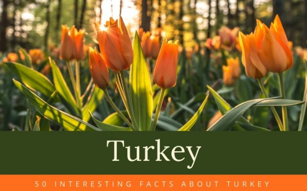 50-interesting-facts-about-Turkey1