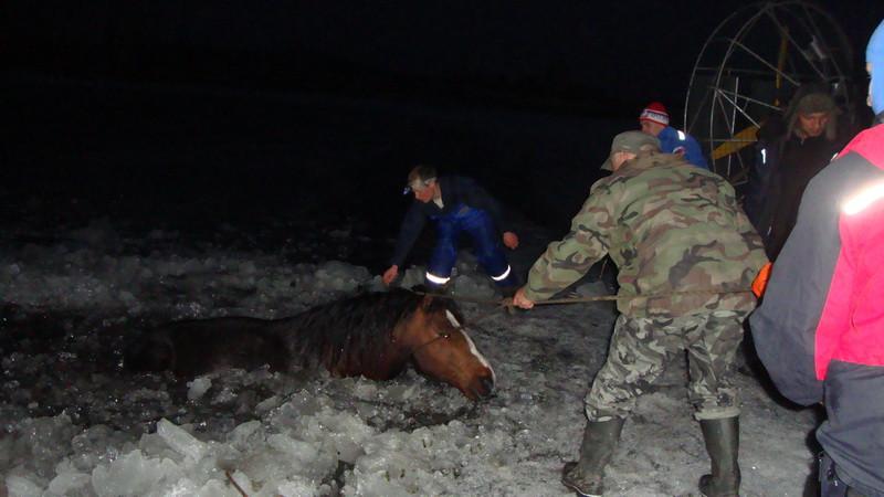 спасение лошадей 2