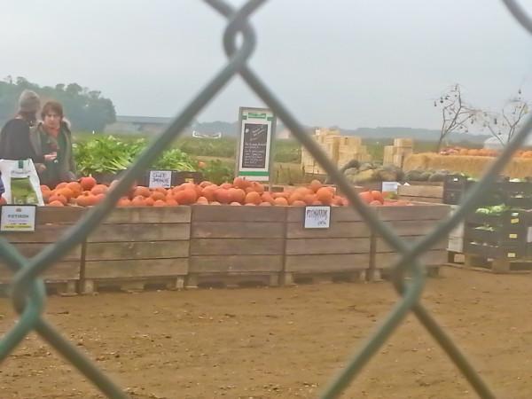 ферма окт 15-124924