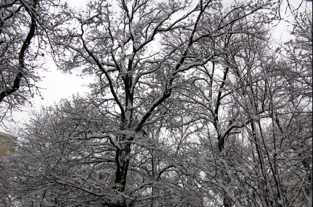 sneg v medone7