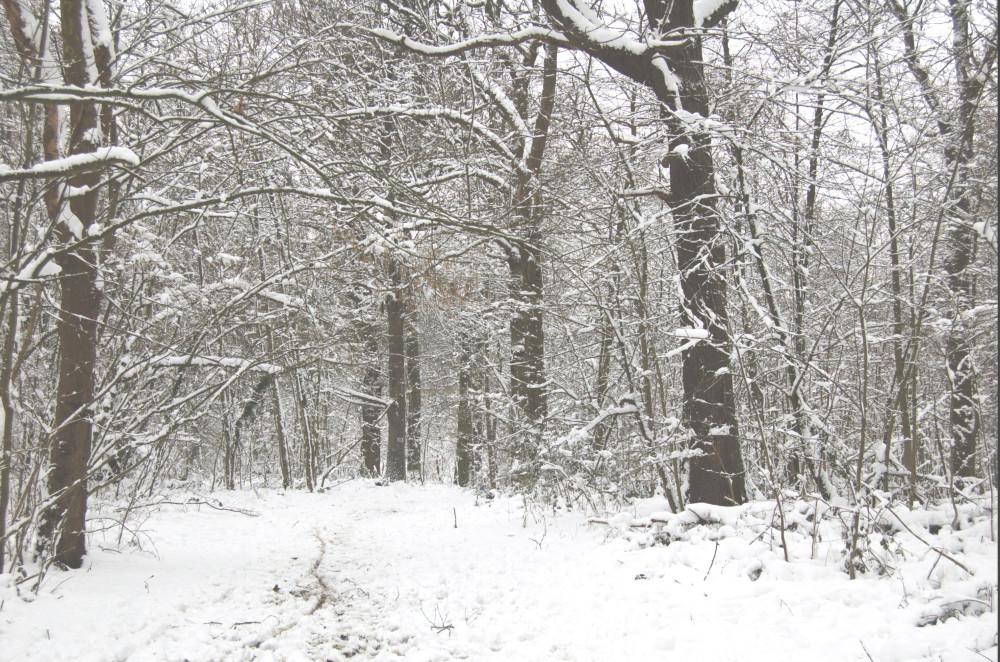 sneg v medone4