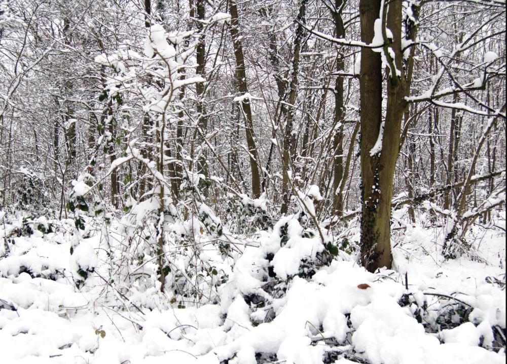 sneg v medone5