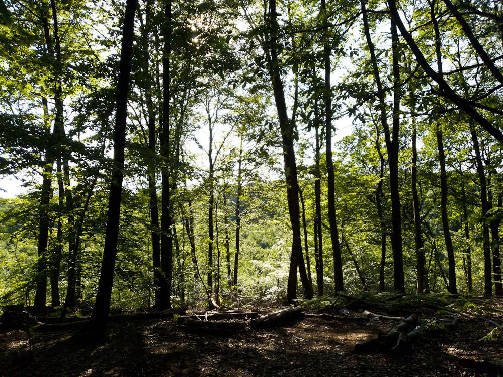 лес с холма