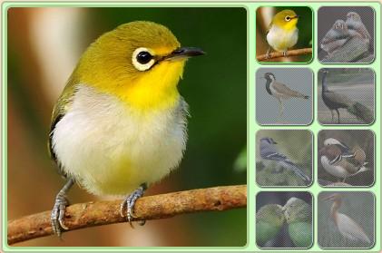 bird-place