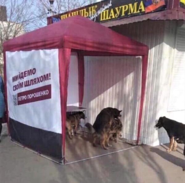 хохлы собаки выборы
