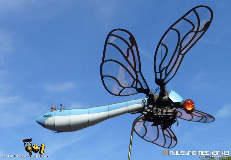 dragonfly_10_lrg