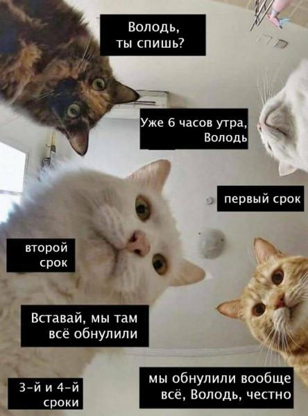 коты-путин-политика-песочница-5775922