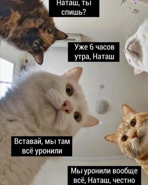 1582367154_pressa_tv_memes_01