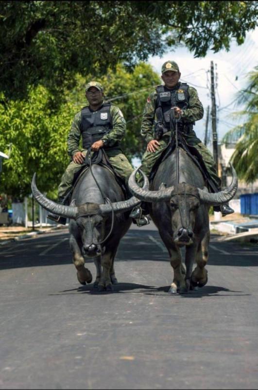 полиция-транспорт-Fernando-Sette-Бразильские-полицейские-на-буйволах-5871909