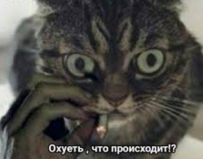 Охуеть что происходит кот