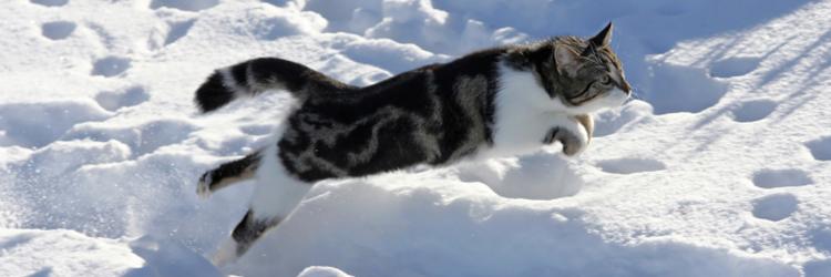 1-4-2-CatJumpingSnow-750x250