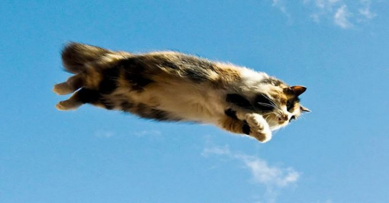flying-cats