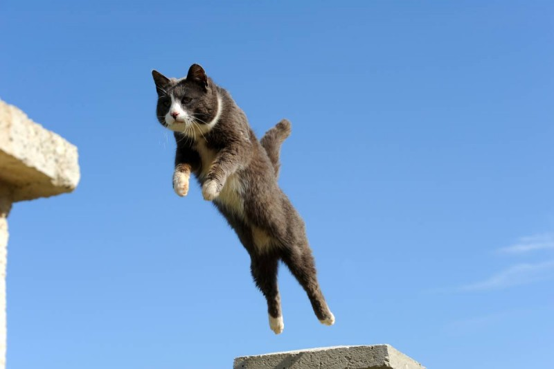 Katze-fliegt