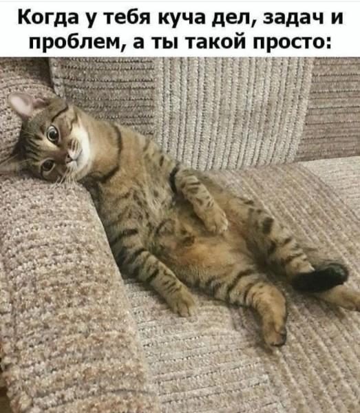 картинка-с-текстом-котэ-бытие-приуныл-6235307