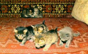 cats1~