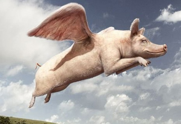 pigs-fly-home-800x550