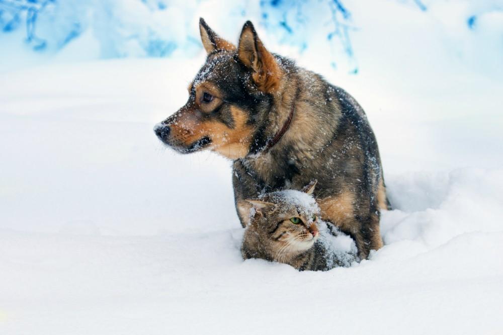 фото-живность-собакен-котэ-4422489