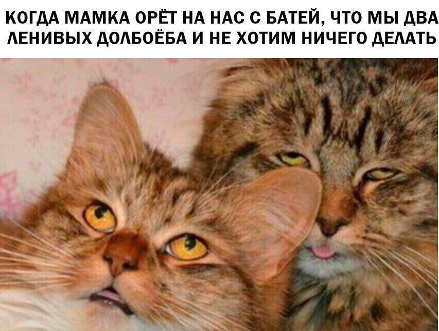 котэ-батя-смешные-картинки-4436467