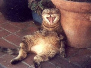 кот-смеется