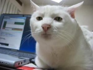 serious-cat-500x375